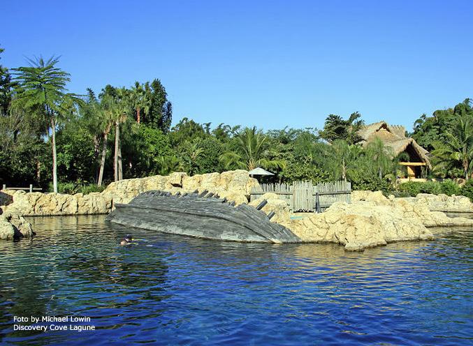 Discovery cove schwimmen mit Delfinen