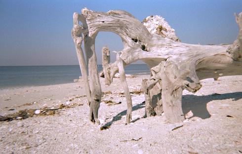 sanibel island florida. Black Bedroom Furniture Sets. Home Design Ideas